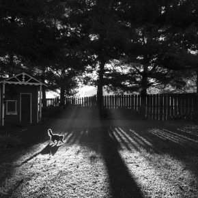 Best of Jury | Gabrielle Cullins | Light and Shadow